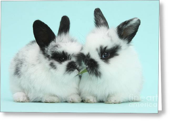 Baby Bunnies Greeting Card by Mark Taylor