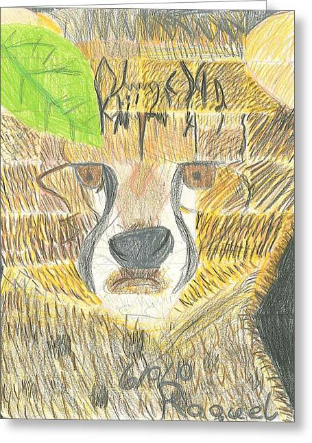 Greeting Card featuring the drawing Baby Cheetah Looking by Fred Hanna