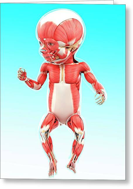 Baby's Muscular System Greeting Card