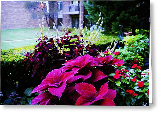 Backyard Flower Greeting Card by Celestial Images
