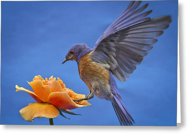 Balancing Act Greeting Card by Jean Noren