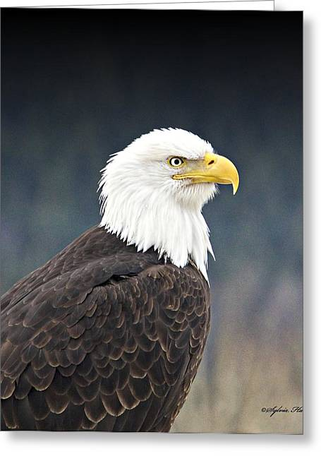 Greeting Card featuring the photograph Bald Eagle by Sylvia Hart