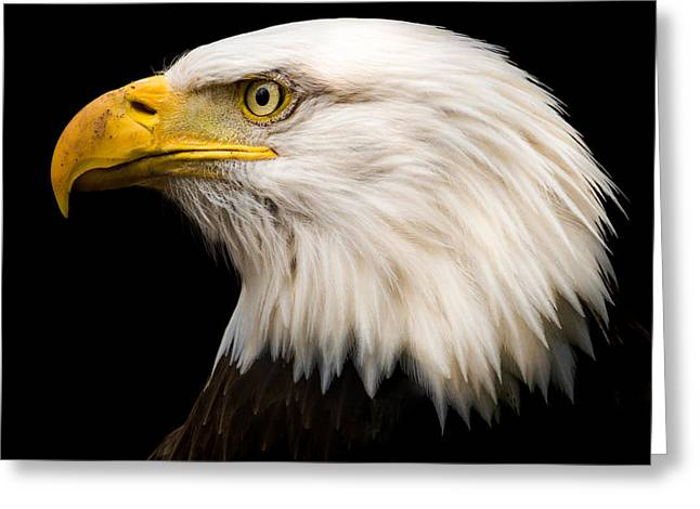 Bald Eagle Greeting Card by Tracy Munson