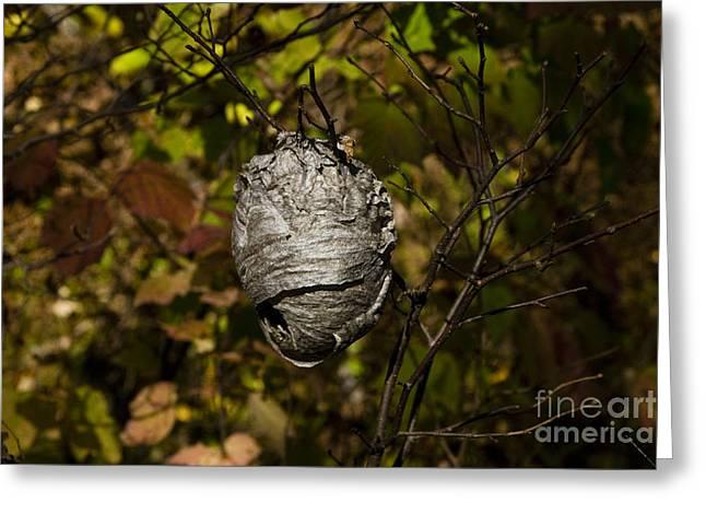 Bald-faced Hornet Nest Greeting Card by Linda Freshwaters Arndt