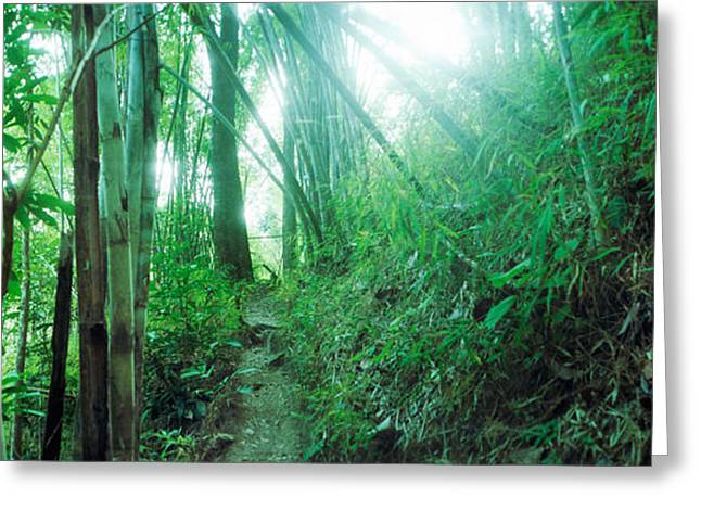Bamboo Forest, Chiang Mai, Thailand Greeting Card