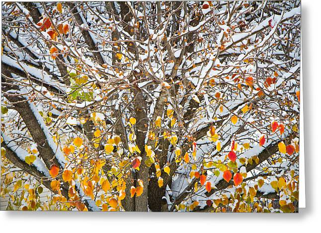 Battle Of The Seasons Greeting Card by Annette Hugen
