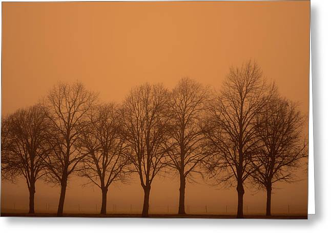 Beautiful Trees In The Fall Greeting Card by Tommytechno Sweden