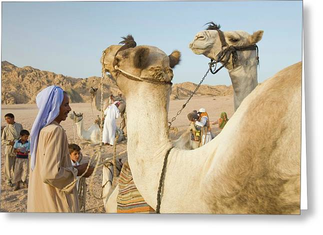 Bedouins And Their Camels Greeting Card by Ashley Cooper