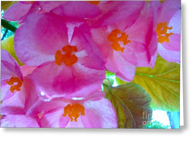 Greeting Card featuring the photograph Begonia Debut by Cathy Dee Janes