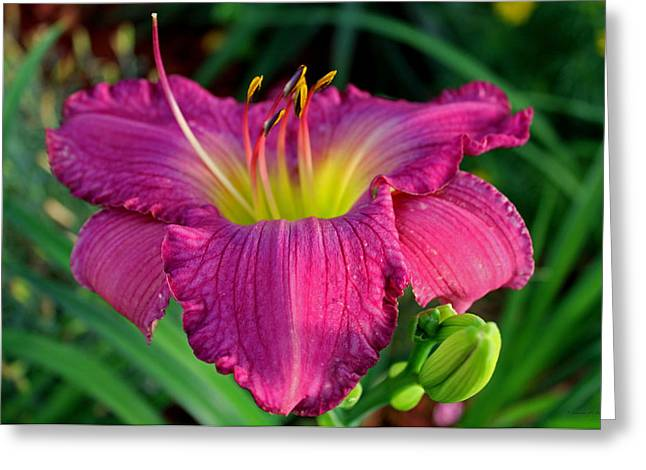 Greeting Card featuring the photograph Bela Lugosi Daylily by Suzanne Stout