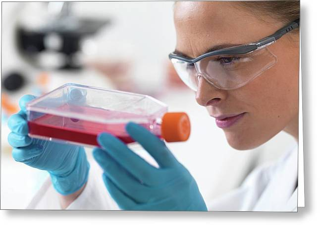 Biologist With Stem Cells Greeting Card by Tek Image