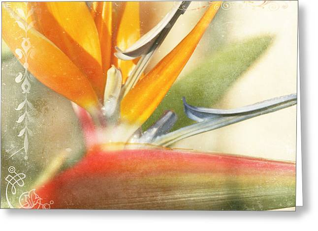 Bird Of Paradise - Strelitzea Reginae - Tropical Flowers Of Hawaii Greeting Card
