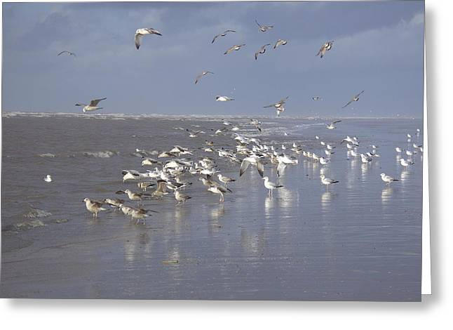 Birds At The Beach Greeting Card