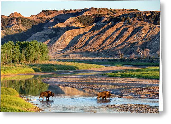 Bison Crossing The Little Missouri Greeting Card