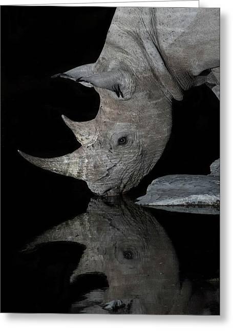 Black Rhinoceros At Night Greeting Card by Tony Camacho/science Photo Library