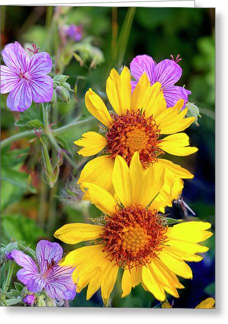 Blanket Flower Aka Brown Eyed Susan Greeting Card by Chuck Haney