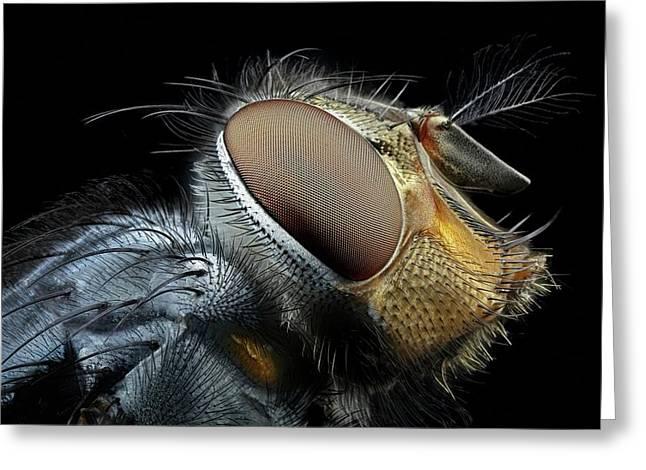 Blowfly Head Greeting Card by Frank Fox