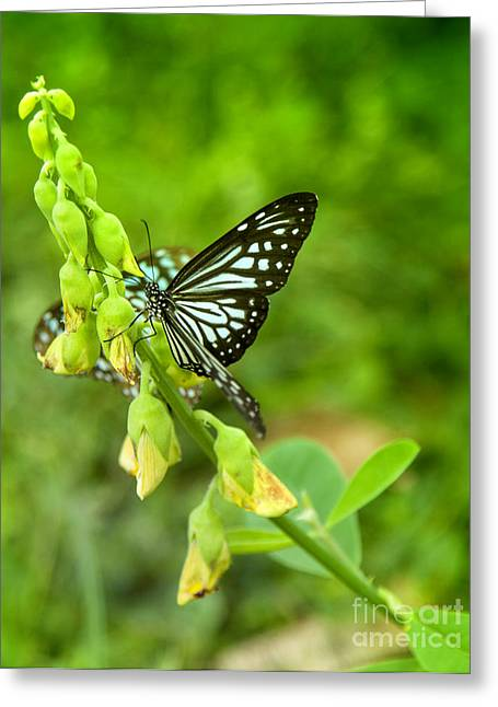 Blue Butterflies In The Green Garden Greeting Card by Gina Koch