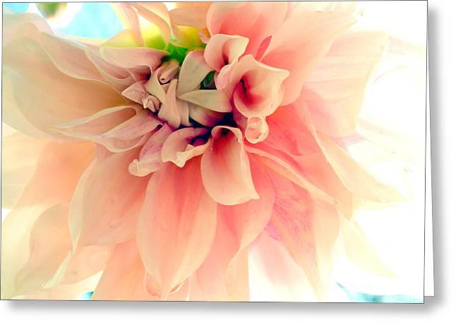Blushing Peach Chiffon No.2 Greeting Card by Christine Belt