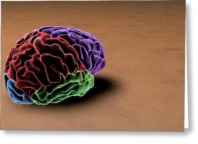 Brain Greeting Card by Sci-comm Studios