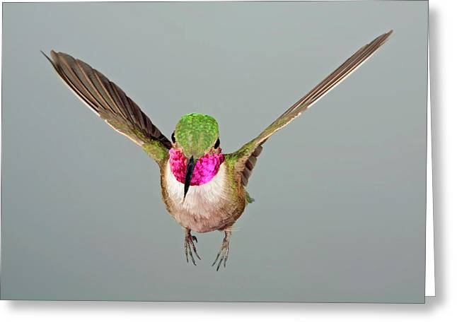 Greeting Card featuring the photograph Broadtail Hummingbird Visualized by Gregory Scott