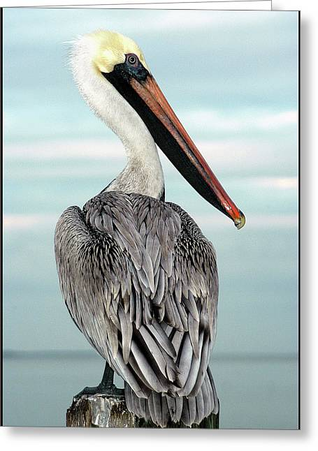 Greeting Card featuring the photograph Brown Pelican by Geraldine Alexander