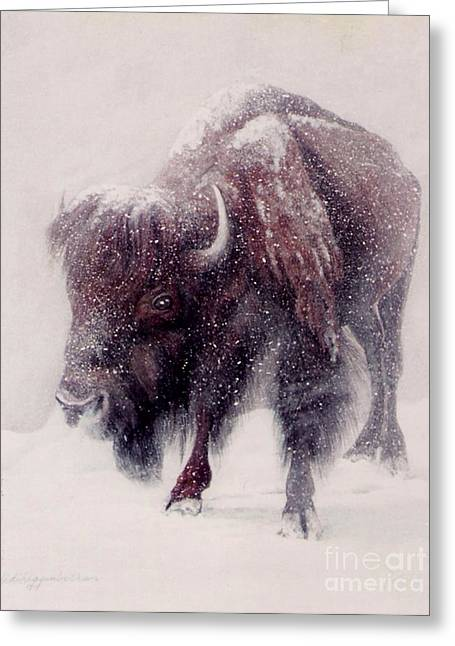 Buffalo Blizzard Greeting Card