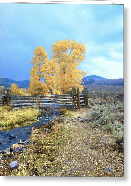 Buffalo Ranch Greeting Card