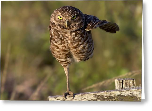 Burrowing Owl Photograph Greeting Card by Meg Rousher