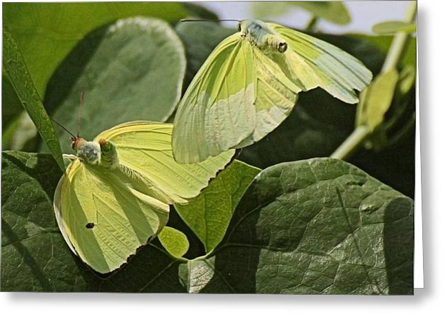 Butterfly Love Greeting Card by Dart and Suze Humeston