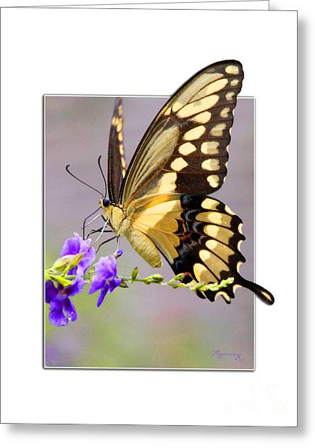 Butterfly Greeting Card by Mariarosa Rockefeller