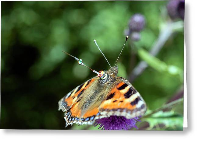 Butterfly Radar Tagging Greeting Card by Louise Murray