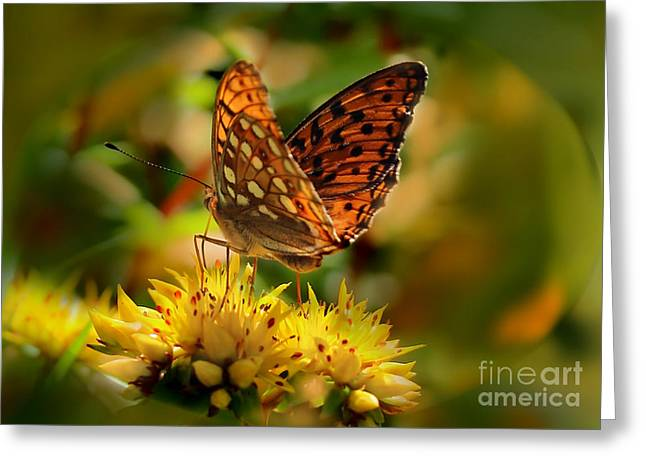 Butterfly Greeting Card by Sylvia  Niklasson