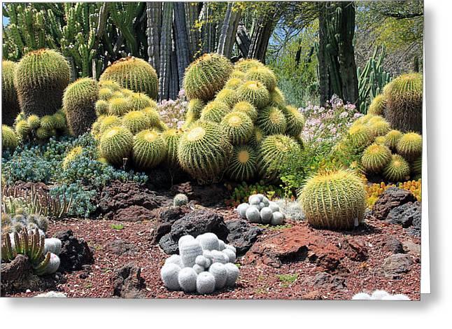 Cactus Greeting Card by Jim McCullaugh