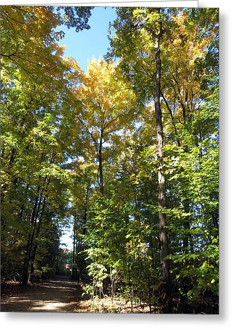 Canadian Wild Tall Trees Fall Season Nature Natural Beautiful Pleasing Scenes  Greeting Card