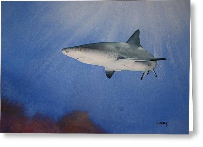 Caribbean Reef Shark 1 Greeting Card by Jeff Lucas