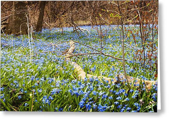 Carpet Of Blue Flowers In Spring Forest Greeting Card