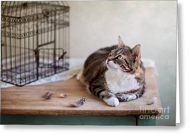 Cat And Bird Cage Greeting Card