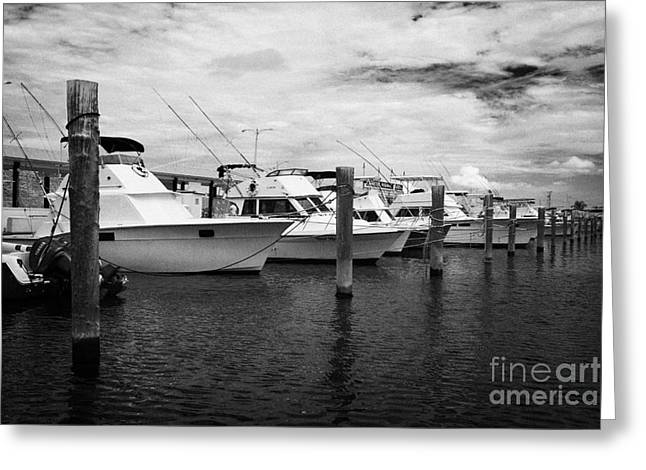 Charter Fishing Boats Charter Boat Row City Marina Key West Florida Usa Greeting Card by Joe Fox