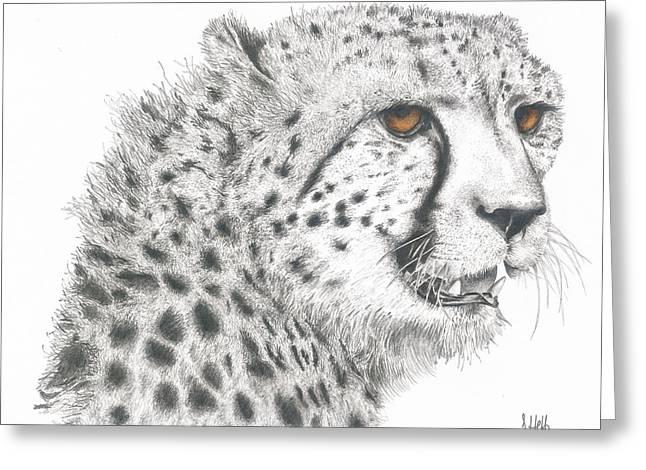 Cheetah Glory Greeting Card by John Hebb