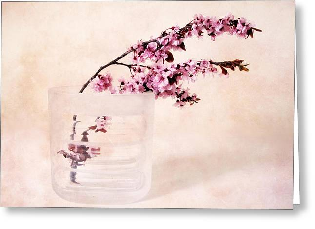 Cherry Blossom Greeting Card by Jessica Jenney