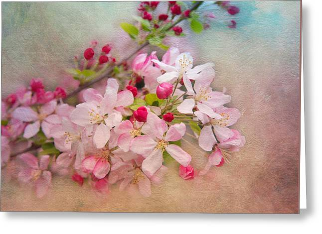 Cherry Blossoms Greeting Card by Lynn Bauer