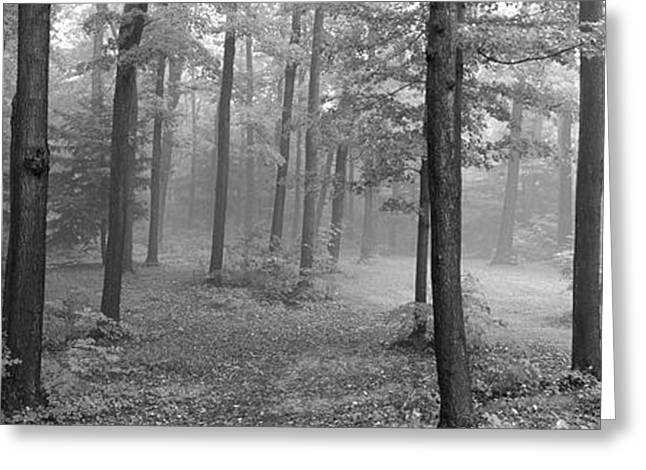 Chestnut Ridge Park, Orchard Park, New Greeting Card by Panoramic Images
