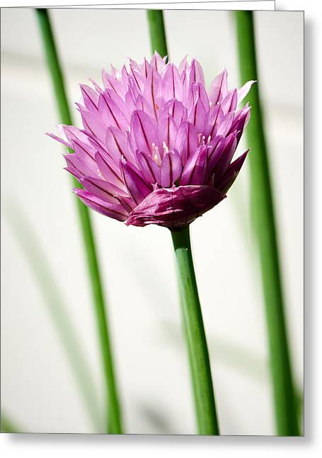 Chives Greeting Card