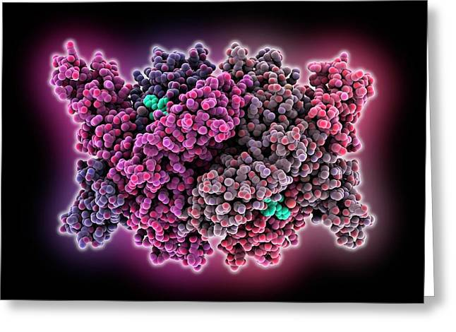 Cholesterol Producing Enzyme And Statin Greeting Card by Laguna Design