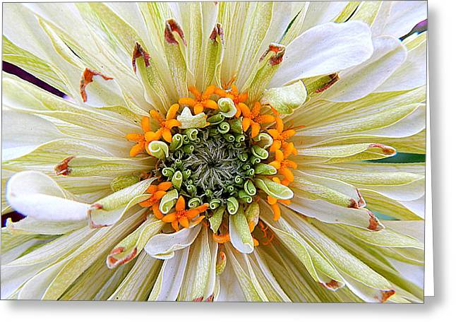 Chrysanthemum Fall In New Orleans Louisiana Greeting Card
