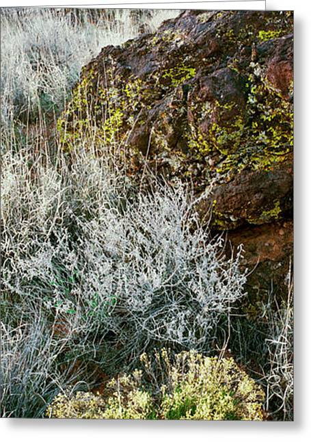 Cliffs In Snow Canyon State Park Greeting Card by Panoramic Images