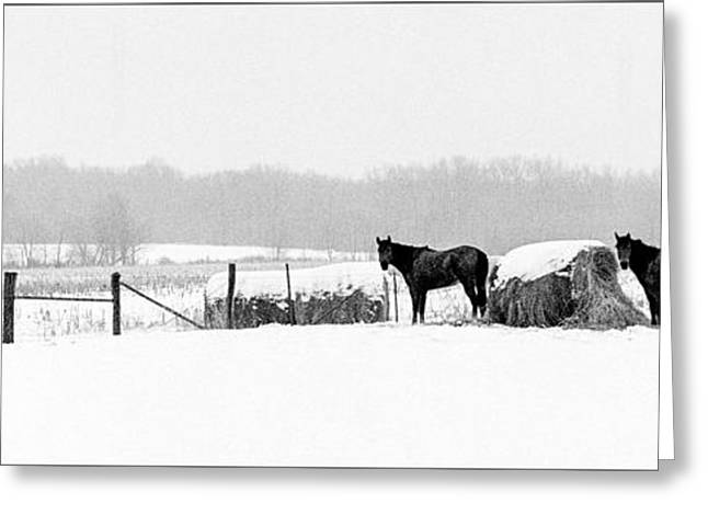 Cold Stare Greeting Card by Wendell Thompson