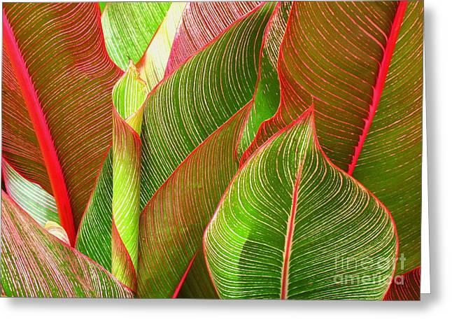 Colorful Leaves Greeting Card by Ranjini Kandasamy