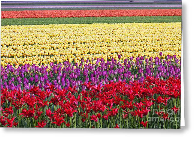 Colors Of Holland Greeting Card